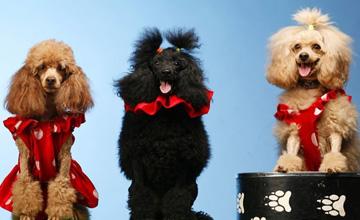 Детское шоу дрессированных животных, участвуют друзья наши меньшие, обязательно принесет много положительных эмоций и веселья.